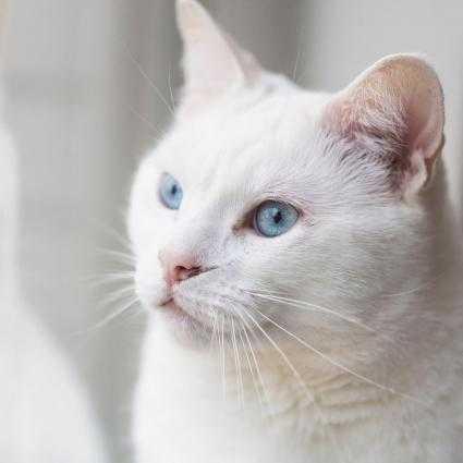 9 Cara Merawat Kucing Anggora Yang Tepat Gotomalls